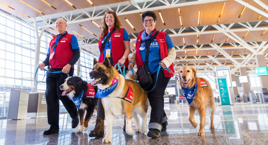 Photo of dogs and handlers walking in airport